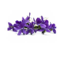 L'Aromatheque Violette Perfume Extract