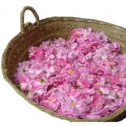Rosenblütenwasser